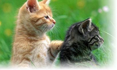 Сонник Кошки, к чему снятся Кошки, что означает увидеть ...